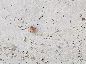 へんなクモ